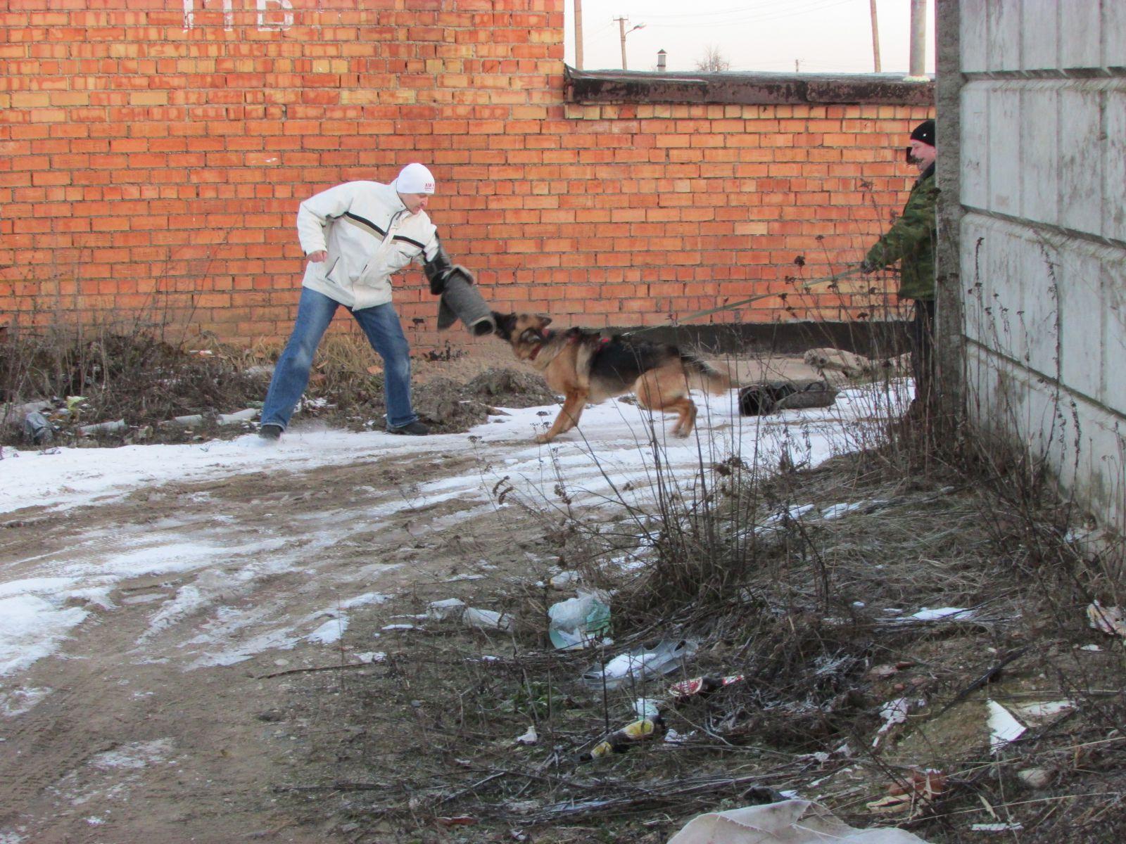 буран собака фото